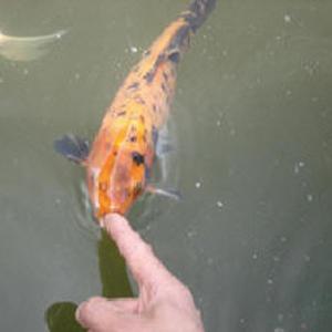 Корм для Рыб: мотыль,  трубочник,  артемия и др.